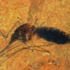 Unprecedented Blood-Filled Mosquito Fossil Raises Questions Over Evolutionary Dating Methods