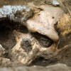 Unprecedented Skull Discovery Raises Serious Questions Over Evolutionary Premises