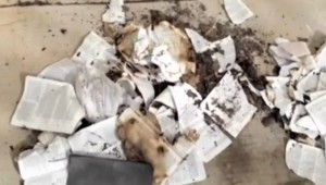 Burned Bibles