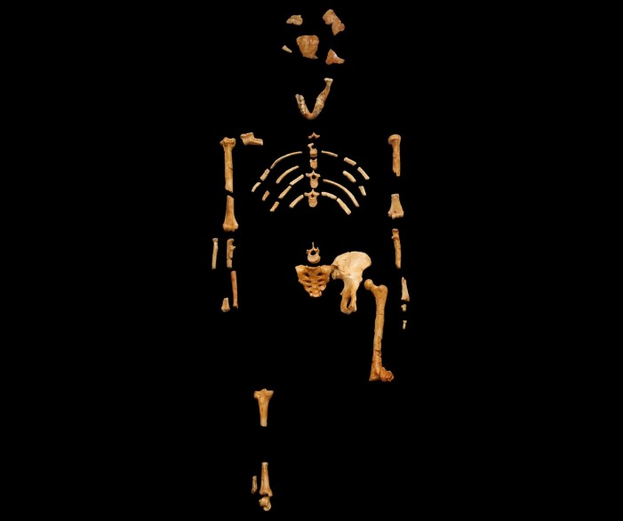 Evolutionary Embarrassment: Part of Famous 'Ape-Man' Skeleton Actually Came from Baboon