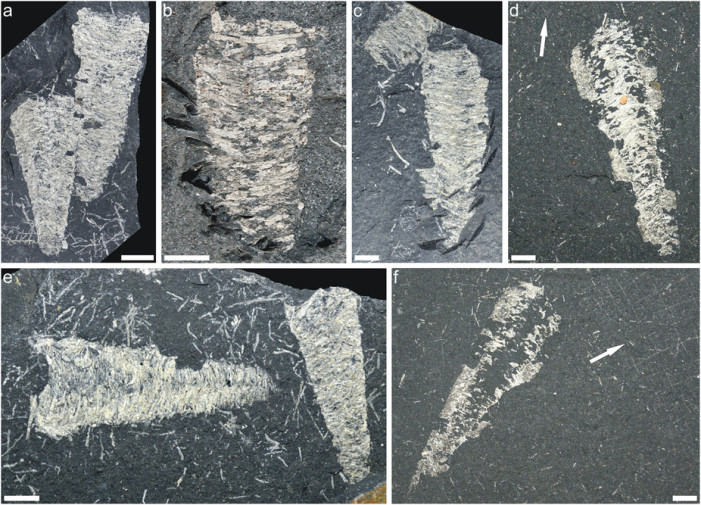 295 Million Year Old Silk? Recent Discovery Could Be Problematic for Evolutionists