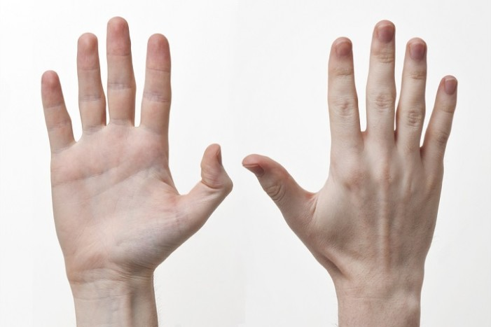 Scientific Journal Retracts Paper Referencing Human Hand's 'Design by Creator'