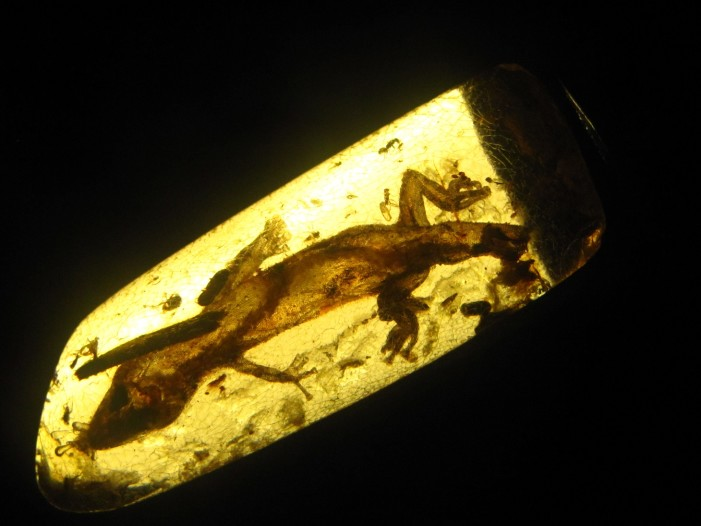 Ancient Lizards Preserved in Amber Could Pose Problems for Evolutionists