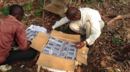 Pygmy in Congo Receive Their Own Audio Bibles