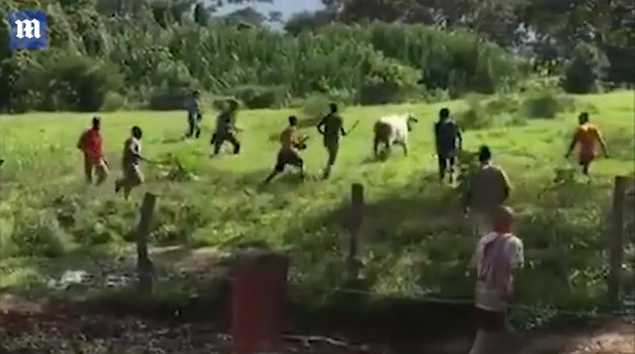Starving Mob Beats Cattle to Death With Rocks, Four People Killed During Looting as Venezuela's Economic Collapse Continues