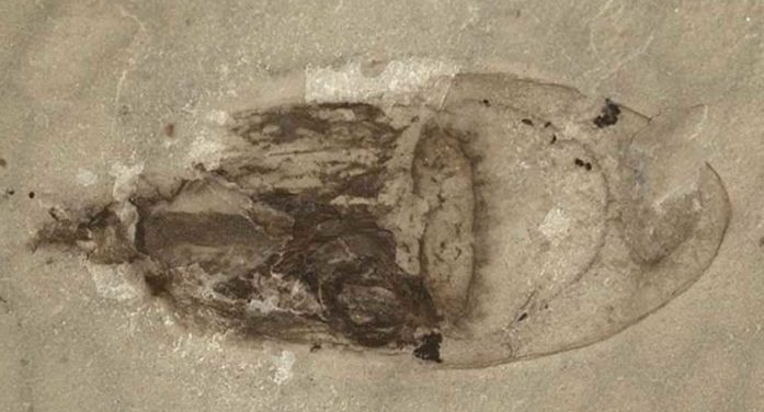 Soft-Bodied Fossils 'Rapidly Buried in Sediment' Discovered in China, Christians Point to Biblical Flood