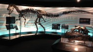 Creation Museum Unveils 'Exceptional' Dinosaur Exhibit to Challenge Evolution